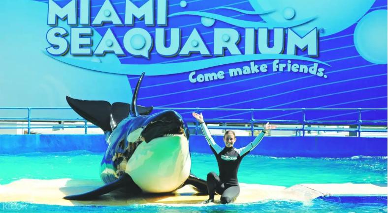 บัตรเข้าชมพิพิธภัณฑ์สัตว์น้ำซีควอเรียม (Seaquarium) ในไมอามี่ ลดราคาถึง 18%