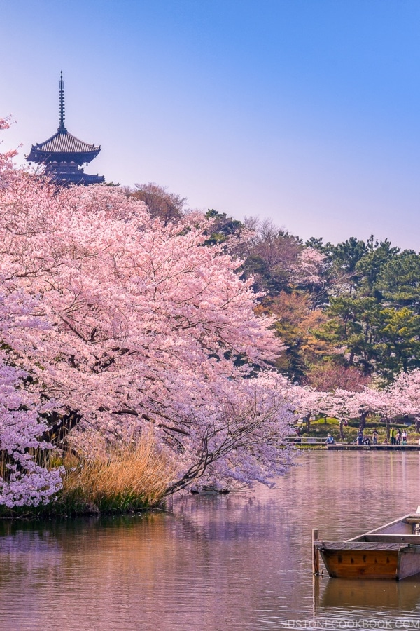 สัมผัสความงามของดอกซากุระ โรงแรมทั่วญี่ปุ่น ลดสูงสุด 60%