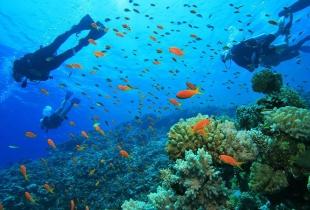 ล่องเรือ ดำน้ำ ดูปะการังที่ภูเก็ต เริ่มต้นแค่หลักร้อย